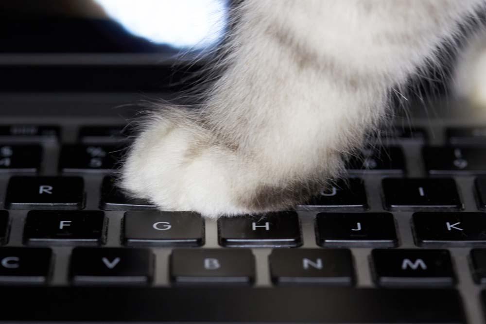 Cat walking on keyboard